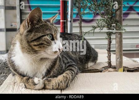 Istanbul streetcat - Stock Photo