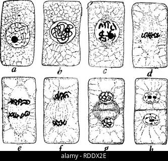 Botany for agricultural students   Botany  CELL MULTIPLICATION 125