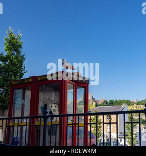 DOVER, UK – Jun 30, 2018: Seagull sits on a red British phone booth - Stock Photo