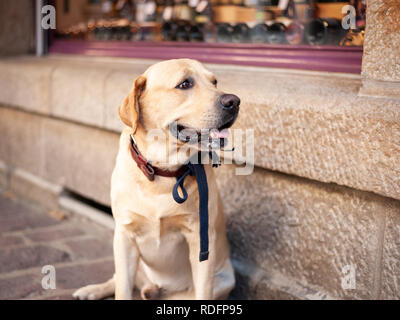 Portrait of a dog sitting in front of a shop and waiting - Stock Photo