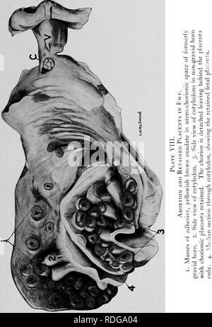 . The diseases of the genital organs of domestic animals. Veterinary medicine. . Please note that these images are extracted from scanned page images that may have been digitally enhanced for readability - coloration and appearance of these illustrations may not perfectly resemble the original work.. Williams, Walter Long, 1856-1945; Williams, Walter Wilkinson, 1892- joint author. Ithaca, N. Y. , The author - Stock Photo