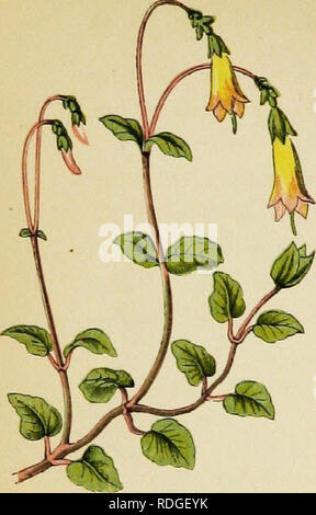 . Wayside weeds, or, Botanical lessons from the lanes and hedgerows : with a chapter on classification . Botany; Wild flowers. . Please note that these images are extracted from scanned page images that may have been digitally enhanced for readability - coloration and appearance of these illustrations may not perfectly resemble the original work.. Thomson, Spencer, fl. 1848-1883. London : Groombridge