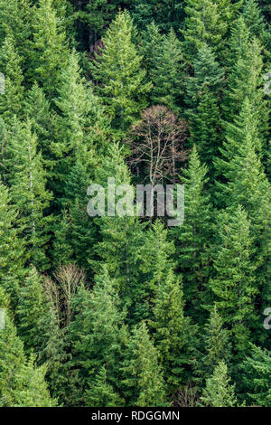 Looking down on a forested mountainside in Western Washington, USA. This is the side of Mount Si as seen from the Little Si trail. - Stock Photo