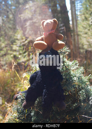 Bear in the woods - Stock Photo