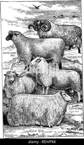 . A manual of elementary zoology . Zoology. Showing various races es Plate XII. —British breeds of sheep. itablishcd by breeding from'.selected individuals.. Please note that these images are extracted from scanned page images that may have been digitally enhanced for readability - coloration and appearance of these illustrations may not perfectly resemble the original work.. Borradaile, L. A. (Lancelot Alexander), 1872-1945. London : H. Frowde, Hodder & Stoughton - Stock Photo