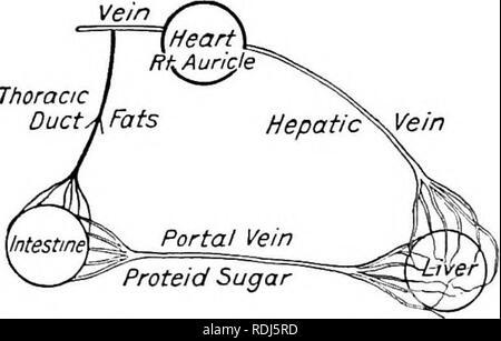 Comparative anatomy and physiology  200 COMPARATIVE ANATOMY