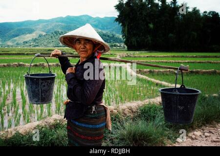 Luang Namta / Laos - JUL 06 2011: woman planting rice in the paddies at rural village area in the middle of the farmland
