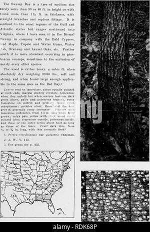 . Handbook of the trees of the northern states and Canada east of the Rocky Mountains, photo-descriptive . Trees. HA^'DBOOK OF TkE.es of the XOETIIElfX StATKS AND CAv.XADA. 219 Tlie Swamp Bay is a tree of medium size rarely more llian 30 or 40 ft. in height or with trunk more than li/o ft. in thickness, with straight branches and copious foliage. It is confined to the coast regions of the Gulf and Atlantic states but ranges northward into Virginia, where I have seen it in the Dismal Swamp in company with the Bald Cypress, Eed Maple, Tupelo and Water Gums, Water Ash, Over-cup and Laurel Oaks, e - Stock Photo
