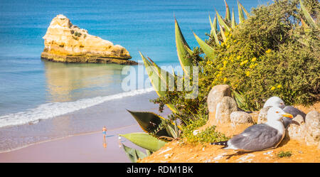 seagull couple - Stock Photo