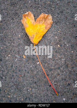 A single yellow foliage leaf in the shape of a heart lying on a street - Stock Photo