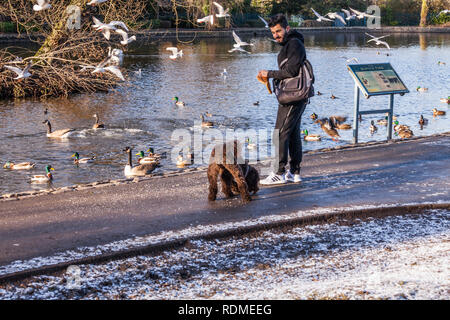 Man feeding ducks,swans and gulls at Ropner Park, Stockton on Tees, England, UK and brown dog pinching food - Stock Photo