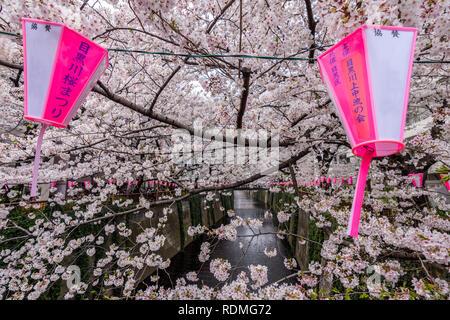 Meguro River under Cherry blossoms, Tokyo, Japan. - Stock Photo