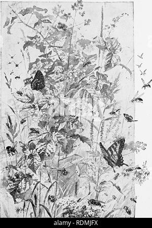 . My studio neighbors. Natural history. . Please note that these images are extracted from scanned page images that may have been digitally enhanced for readability - coloration and appearance of these illustrations may not perfectly resemble the original work.. Gibson, W. Hamilton (William Hamilton), 1850-1896. New York and London, Harper & Brothers - Stock Photo