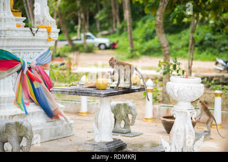 Monkeys (Macaca fascicularis) visit a Buddhist shrine paying a special attention to food. Ao Nang, Krabi, Thailand. - Stock Photo