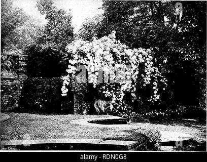 """. Gardens for small country houses. Gardens. Gardens for Small Country Houses. 17 CHAPTER III.—A GARDEN IN BERKSHIRE. Roses Grown as """" Fountains -Brick Dry-walling—Stone-edged Water Garden^—Refined Detail and Ornaments. ON the outskirts of the village, a high old wall, with massi'e buttresses and well-wrought coping, encloses a beautiful new house of moderate size, designed by Mr. Lutyens, and a piece of ground of something under three acres. The land, when taken in hand, was old garden and orchard, with a strong westerly slope ; the soil a rich loam of calcareous character. The lower pa - Stock Photo"""