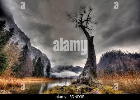 Tree with bare branches in front of grey clouds, Leopoldsteinersee, iron ore, Austria - Stock Photo
