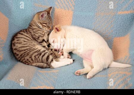 Kitten and young peacefully sleeping beside each other - Stock Photo