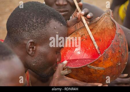 Nyangatom, Bume or Buma man drinking cow blood, Omo Valley, Ethiopia, Africa - Stock Photo