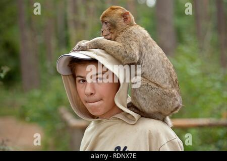 A Barbary Macaque (Macaca sylvanus) sitting on a boy's shoulders - Stock Photo