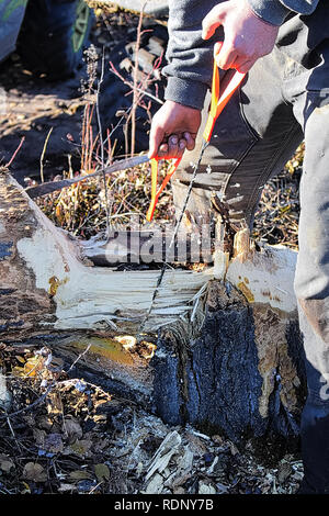Using a pocket chain saw to cut through a log. - Stock Photo