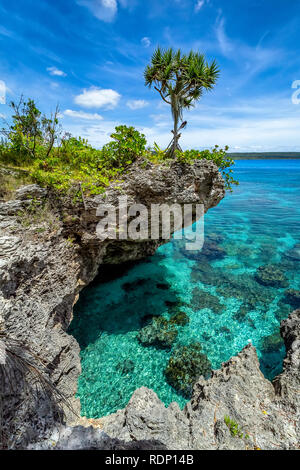 View of a single tree on top of a curved cliff with beautiful turquoise waters on the Island of Mare, New Caledonia