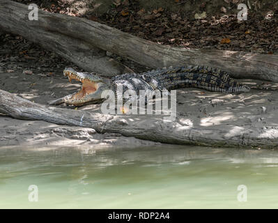 Crocodile resting  with mouth open on the banks of the East Alligator River, Kakadu, Northern Territory,Top End, Australia - Stock Photo