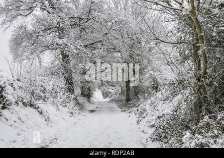 Winter - snow covered lane and trees in countryside outside Reading, Berkshire, UK - Stock Photo