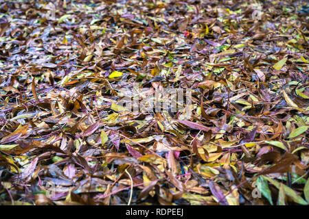 Colorful leaves fallen on the ground on a rainy day; background for autumn - Stock Photo