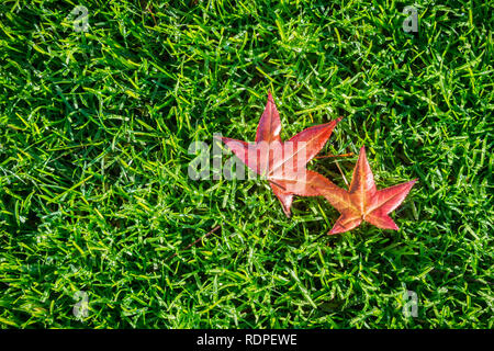 Autumn colored leaves fallen on a verdant meadow; background for autumn - Stock Photo