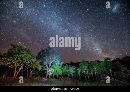 The Milkyway stretches across the sky over African bush at Umkhuze game reserve, part of Isimangaliso Wetland Park in South Africa - Stock Photo