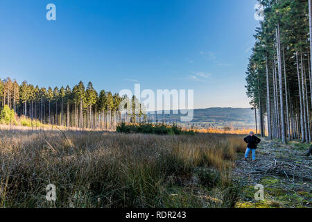 image of a woman wearing winter clothing who stands among tall pine trees on an open esplanade in the woods on a winter day in the Belgian Ardennes - Stock Photo