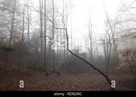 Woodland clearing on a foggy winter morning in January. Ground is covered in fallen leaves and most trees are bare. - Stock Photo