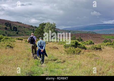 Two men walking across heather and juniper covered hill in Cairngorms National Park near Boat of Garten, Scotland, UK - Stock Photo