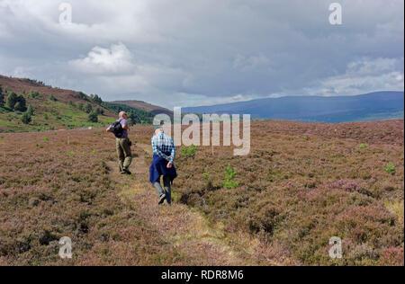 Two men walking across heather moor in Cairngorms National Park near Boat of Garten, Scotland, UK - Stock Photo