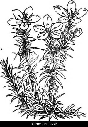 . My garden, its plan and culture together with a general description of its geology, botany, and natural history. Gardening. . Please note that these images are extracted from scanned page images that may have been digitally enhanced for readability - coloration and appearance of these illustrations may not perfectly resemble the original work.. Smee, Alfred, 1818-1877. London, Bell and Daldy - Stock Photo