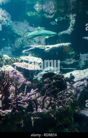 Underwater landscape with coral reef and fish. The aquarium inhabitants of the underwater world - Stock Photo