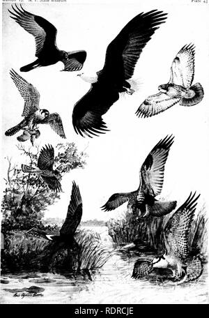 Birds Of New York Plate 43 6901482722 Stock Photo Alamy
