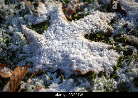 Berlin, Germany. 18th Jan, 2019. Ice gathered on a fallen leaf at Tiergarten park, in Berlin, Germany, January 18, 2018. Credit: Omer Messinger/ZUMA Wire/Alamy Live News - Stock Photo