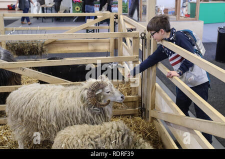 Berlin, Germany. 18th Jan, 2019. A boy feeds a goat during the International Green Week (IGW) Berlin in Berlin, capital of Germany, on Jan. 18, 2019. The IGW Berlin, an international exhibition of the food, agriculture and gardening industries, opened on Friday and will last until Jan. 27, attracting more than 1,700 exhibitors from all over the world. Credit: Shan Yuqi/Xinhua/Alamy Live News - Stock Photo