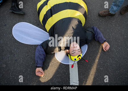 Berlin, Germany. 19th Jan, 2019. A demonstration participant lies in a bee costume on the floor at the Brandenburg Gate and protests under the motto 'We are fed up with agricultural industry'. On the occasion of the agricultural fair Green Week several thousand people demonstrate in Berlin for more environmental and animal protection in agriculture. Credit: Ralf Hirschberger/dpa/Alamy Live News - Stock Photo