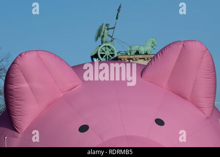 Berlin, Germany. 19th Jan, 2019. An inflatable pig floats in front of the Quadriga at the Brandenburg Gate during a protest under the motto 'We are fed up with agricultural industry! On the occasion of the agricultural fair Green Week several thousand people demonstrate in Berlin for more environmental and animal protection in agriculture. Credit: Ralf Hirschberger/dpa/Alamy Live News - Stock Photo