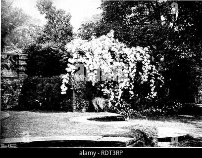 """. Gardens for small country houses . Gardens, English. Gardens for Small Cowttry Houses. 17 CHAPTER III.—A GARDEN IN BERKSHIRE. Roses Grown as """" Foimtains""""—Brick Dry-walling—Stone-edged Water Garden—Refined Detail and Ornaments. ON the outskirts of the village, a high old wall, with massive buttresses and well-wrought coping, encloses a beautiful new house of moderate size, designed by Mr. Lutyens, and a piece of ground of something under three acres. The land, when taken in hand, was old garden- and orchard, with a strong westerly slope ; the soil a rich loam of calcareous character - Stock Photo"""