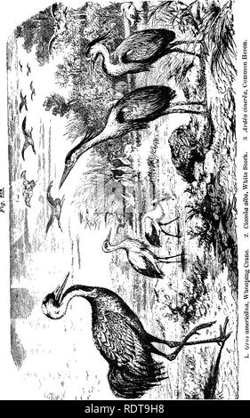 . Fourteen weeks in zoology. Zoology. 150 SUBKINGDOM VEETEBKATA.. Please note that these images are extracted from scanned page images that may have been digitally enhanced for readability - coloration and appearance of these illustrations may not perfectly resemble the original work.. Steele, Joel Dorman, 1836-1886. New York, Chicago [etc. ] A. S. Barnes & Company - Stock Photo