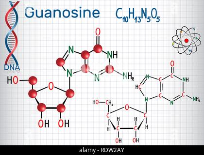 Guanosine - purine nucleoside molecule, is important part of GMP, GDP, cGMP , GTP, RNA, DNA. Structural chemical formula and molecule model. Sheet of  - Stock Photo