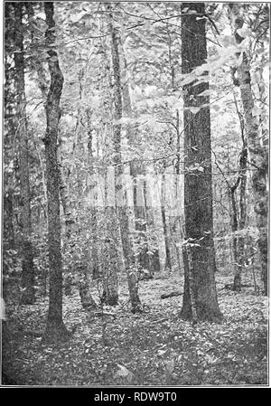 . Textbook of botany. Botany. FORESTRY AND FOREST MANAGEMENT 345. Fig. 194. — A virgin forest of mixed hardwoods. Photograph from the Wisconsin State Conservation Commission.. Please note that these images are extracted from scanned page images that may have been digitally enhanced for readability - coloration and appearance of these illustrations may not perfectly resemble the original work.. Allen, Charles E. (Charles Elmer), b. 1872; Gilbert, Edward Martinius, joint author. Boston, New York [etc. ] D. C. Heath & co - Stock Photo