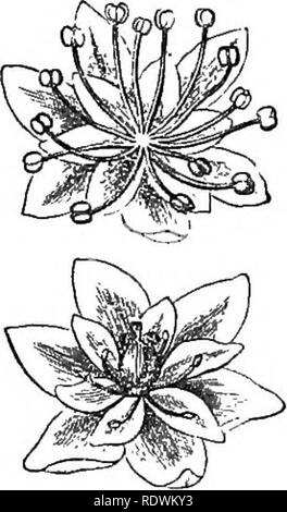 . Introduction to structural and systematic botany, and vegetable physiology. Botany. SUPPRESSION OR ABORTION OF PARTS. 261. Please note that these images are extracted from scanned page images that may have been digitally enhanced for readability - coloration and appearance of these illustrations may not perfectly resemble the original work.. Gray, Asa, 1810-1888. New York [etc. ] Ivison, Blakeman, Taylor & Co. - Stock Photo