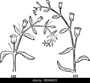 . Introduction to structural and systematic botany, and vegetable physiology. Botany. 407. There are several abnormal modifications of definite inflo- rescence, arising from irregular development, or the suppression of parts, such as the non-appearance sometimes of the central flower, or often of one of the lateral branches at each division; as in the ultimate ramifications of Fig. 331, where one of the lateral pedicels is wanting. When this deviation is completely manifested, that is, when one of the side branches regularly fails, the cyme is apparently converted into a kind of one-sided race - Stock Photo
