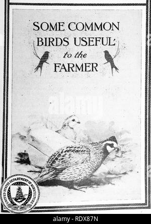 . [Collected reprints, 1895-1916. Birds. U.S.DEPARTMENT OF AGRICULTURE FARMERS' BULLETIN No. 630. Please note that these images are extracted from scanned page images that may have been digitally enhanced for readability - coloration and appearance of these illustrations may not perfectly resemble the original work.. Beal, F. E. L. (Foster Ellenborough Lascelles), 1840-1916. s. l. , s. n. - Stock Photo