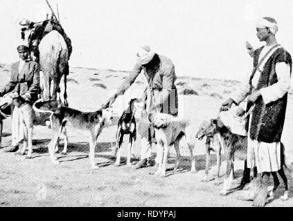 """. The new book of the dog; a comprehensive natural history of British dogs and their foreign relatives, with chapters on law, breeding, kennel management, and veterinary treatment. Dogs. ORIENTAL GREYHOUNDS. 477 are endowed with sagacity and great powers of endurance. So fully qualified for their work, no wonder they are preserved with so much care, and the Arabs may well say of them as of their treasured horses, """" Are not these the inheritance of our fathers, and shall not we to our sons bequeath them ? """" The natives give great attention to the rearing of their Slughi. They bring th - Stock Photo"""