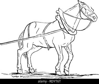 Productive Horse Husbandry Horses Horses 6 Structure And Function